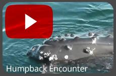 humpbackvideoplay 1