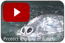 protectfundyvideoplay